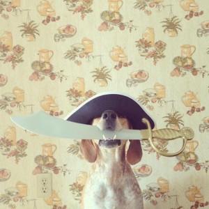 Dat ass den Edi. Dem Mullebutz sein Piraten Hond! Ma soss ass hien awer ganz léif!